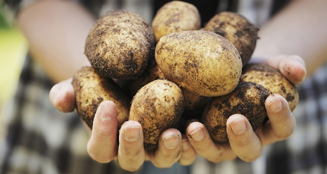 Dietary information and potato nutrition