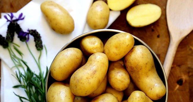 Jazzy Salad Potato Variety
